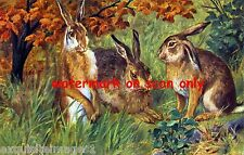 Antique Art~Three Large Brown Jack Rabbits in Grassy Field~ New Large Note Cards