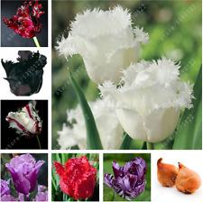 2 bulbs true tulip bulbs,tulip flower,(not tulip seeds),flower bulbs,outdoor