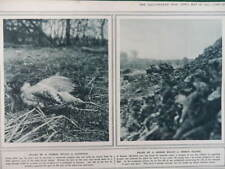1915 KILLED BY GERMAN BULLETS - A PARTRIDGE & FRENCH SOLDIER WWI WW1