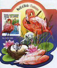 Sierra Leone 2015 MNH Flamingos 1v S/S American Flamingo Birds Stamps