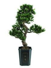 Bonsai Podocarpus 313 Spitzen 80cm, Kunstpflanze