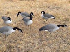 AVERY GHG FFD FULL BODY FLOCKED CANADA GOOSE DECOYS HARVESTER W/6 SLOT BAG NEW!