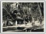 Tunisie, Tozeur (توزر), Dans l'Oasis  vintage silver print Tirage argenti
