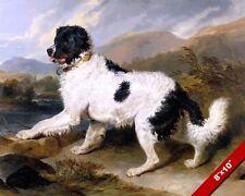 LANDSEER BLACK WHITE NEWFOUNDLAND DOG OIL PAINTING ART REAL CANVAS GICLEEPRINT