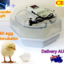 NEW Mini 60 Chicken Hen Bird Poultry Eggs Digital INCUBATOR+ Free Candle Gift