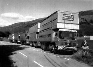 ROAD HAULAGE LIVESTOCK TRANSPORT LORRY PHOT0-BROWNS-SCOTLAND  & ENGLAND