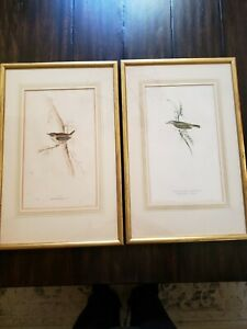 Pair ORIGINAL John & Elizabeth GOULD Hand Colored Lithograph BIRD Prints