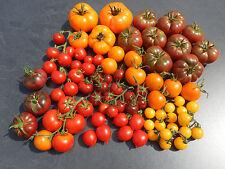 Tomaten alte samenfeste Sorten Tomatensamen zum Aussuchen