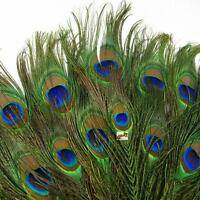 50pcs lots Real Natural Peacock Tail Eyes Feathers 8-12 Inches about 23-30cm U^