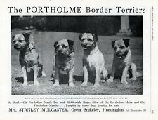 BORDER TERRIER OUR DOGS 1951 BREED KENNEL ADVERT PRINT PAGE  PORTHOLME KENNELS