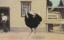 """Bloomsburg, Pa - """"William"""", African Ostrich & Feather Co"""