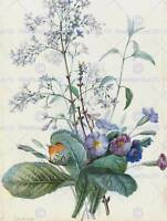 PIERRE JOSEPH REDOUTE FRENCH BOUQUET FLOWERS INSECTS ART PAINTING POSTER BB6286B