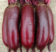 """Beet """"Cylindra"""" Tender And Sweet  175+ SEEDS 50-60 Days COMBINED SHIPPING"""