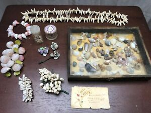 Antique Edwardian Sea Shell Jewelry and Shell Collection