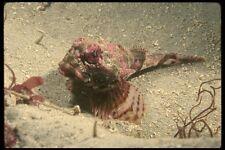 045068 Bol quadricornis peces Monterey Bay A4 Foto Impresión