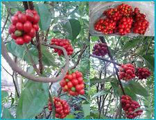 100 seeds FreeShipping Tiliacora triandra Thai Herb Rare seed,Jello Plant,ย่านาง