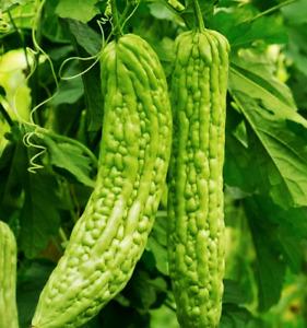 Bitter Melon Seeds | USA Chinese Gourd Asian Calabash Luffa Squash Wax For 2021