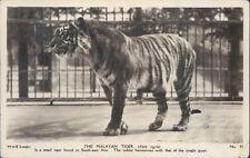 Postcard an  Malay Tiger Real photo posted 1943