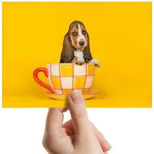 "Teacup Basset Hound Puppy Dog Small Photograph 6""x4"" Art Print Photo Gift #16254"