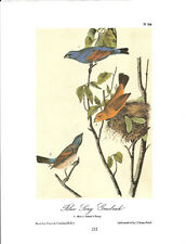 Blue Song Grosbeak Vintage Bird Print by John James Audubon ABONA212