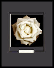 Harold Feinstein Ivory ROSE poster immagine stampa d'arte nel quadro in alluminio nero 50x40cm