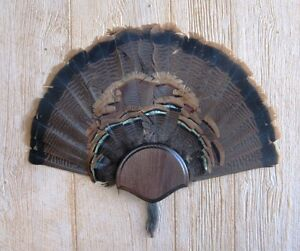 Solid Dark Oak Turkey Fan / Beard Mounting Kit -01