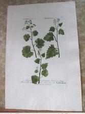 """Vintage Engraving,ALCHIMILLA,C.1740,WEINMANN,Botanical,20x13.5"""",Mezzotint"""