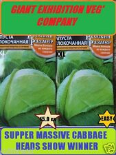 GIANT CABBAGE EXHIBITION CABBAGE SEED <> XXL CABBAGE HEAD + 15 Kg <> + 50 SEEDS