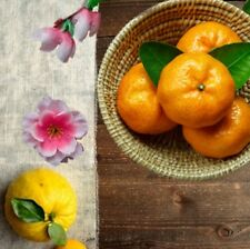 Yuzu & Satsuma Perfume Fragrance Roll on Oil Bottle Grapefruit Tangerine Scent