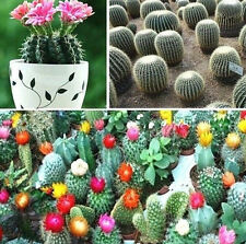 FD943 Mixture Of Cactus Flower Color Plant Cactus Indoor Plant Seeds Seed 10PC:)