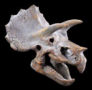 Rilievo Parete - Dinosauri Testa - Triceratopo - Decorazione Parete Dino Drago