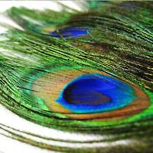 PEACOCK TAIL FEATHERS Feather NATURAL 50-80 LONG MILLINERY CRAFT  UK