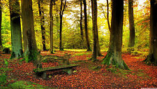 Nature Bench Forest - Huge Wall  Poster  22 x 34 ( Fast Shipping )  in Tube