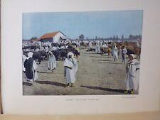 ALGERIE: Gravure 19° in folio couleur / FOIRE DU BETAIL A SIDI-BEL-ABBES