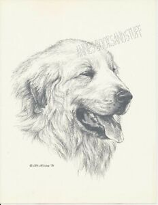 142 GREAT PYRENEES portrait dog art print * Pen and ink drawing by Jan Jellins
