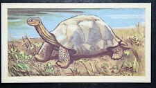GIANT TORTOISE  Galapagos   Vintage Colour Card  VGC