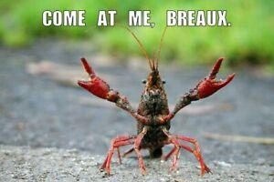 6 (XL) Live Louisiana Crayfish