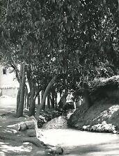 VERS PASARGAD c. 1960 - Canal dans un Village  Iran - Div 6337