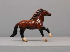 Beautiful Northern Rose Anglo Arabian Running Horse