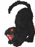 HALLOWEEN  BLACK CAT SOUNDS HAUNTED HOUSE  PROP DECORATION