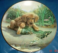 Lovely Golden Retriever Puppy 8 1/2 Inch Plate CATCH OF THE DAY