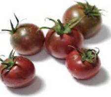 TOMATO black cherry tomato 25 seed heirloom for your edible vegetable garden