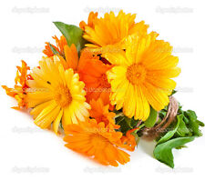 100+ Seeds ORGANIC CALENDULA officinalis Edible Flowers Medicinal  Pot Marigold