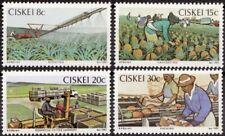 Ciskei 1982 Mi 26-29 Ananasteelt, Pineapple Industry MNH