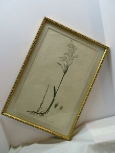 Antique Botany print Aira Aquatica  William Curtis ? Watermarked J. Whatman 1821