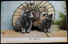 "OLD POSTCARD OF CATS / KITTENS - ""TWO BEAUTIES"""