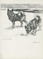 NORWEGIAN ELKHOUND LOVELY OLD 1938 DOG ART PRINT by VERNON STOKES