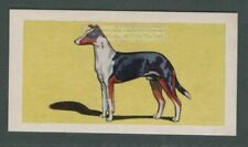 Smooth Collie Dog Canine Pet Animal Trade Ad Card