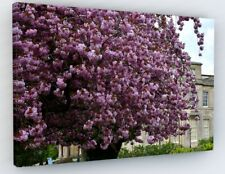 STUNNING PINK CHERRY BLOSSOM TREE CANVAS PICTURE PRINT ART PREMIUM FRAME #W3