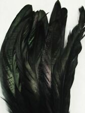 Black Coque Rooster Tail Feathers 8-10 inch per ounce